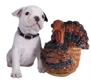 Small White Dog Sitting Next to Wooden Turkey Statue