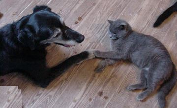 Dog and Cat laying down and touching Paws